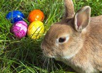 Iepuraşi şi ouă de Paşti