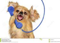 Discuţii ciudate la telefon | câine care vorbeşte la telefon